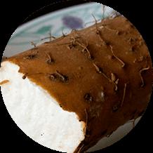 Chiết xuất Dioscorea communis
